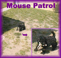 Mouse patrol