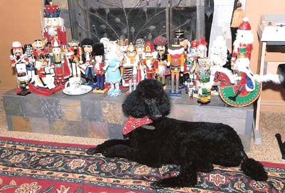 Lovely Christmas Poodle