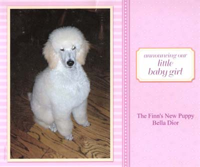 Announcing our little baby girl...The Finn's New Puppy Bella Dior